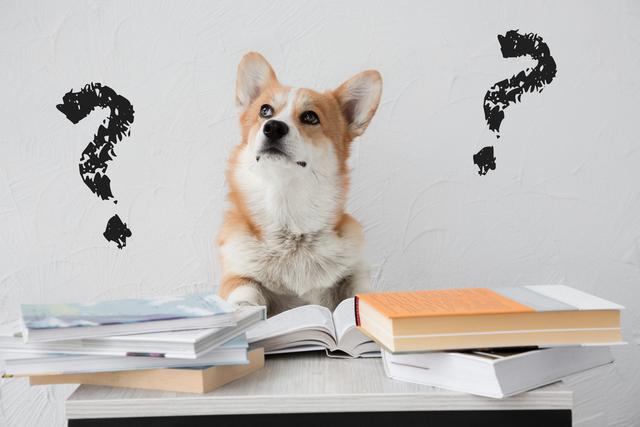 疑問を抱く犬